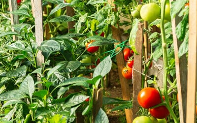 Keeping Your Food Garden Safe in a Greenhouse