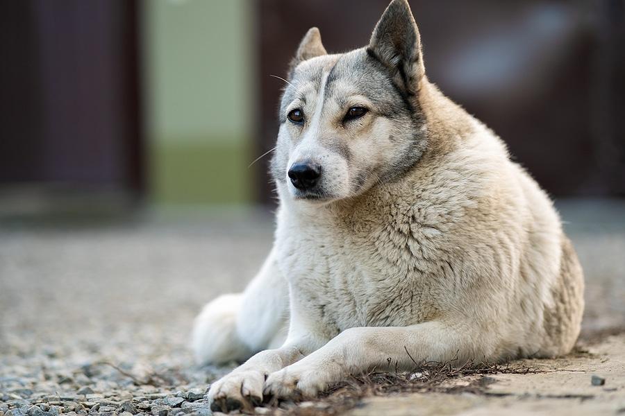 Safe Dog Kennel